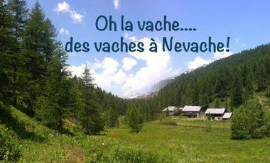 Visueel van project Oh la vache... des vaches à Névache!