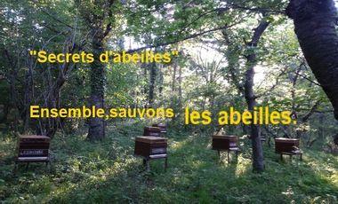"""Project visual """"Secrets d'Abeilles"""". Ensemble, sauvons les abeilles"""
