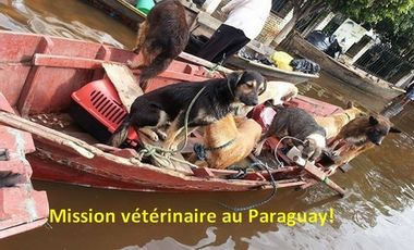 Project visual mission humanitaire au Paraguay : steriliser et déparasiter les animaux errants