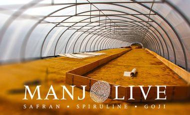 Visueel van project MANJOLIVE ● safran ● spiruline ● goji ●