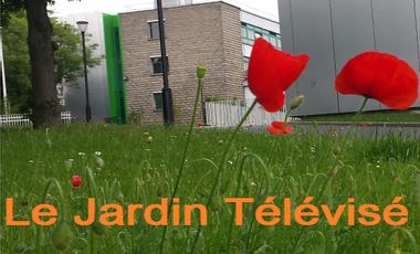 Project visual Le Jardin Télévisé