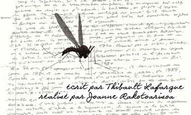 Project visual Le Moustique