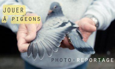 Project visual Jouer à pigeons