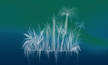 Project visual Jungle domestique