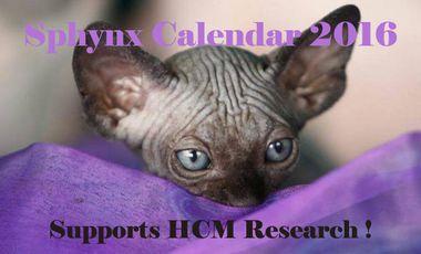 Project visual Sphynx Calendar 2016