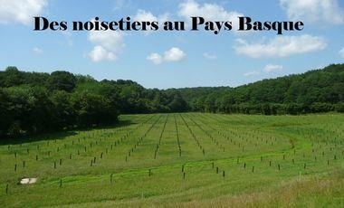 Visuel du projet Des noisetiers au Pays Basque