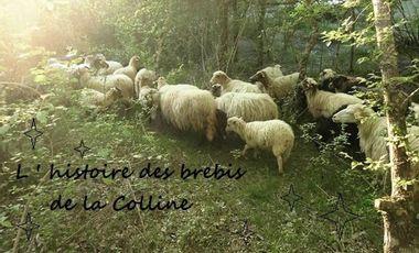 "Visueel van project Les brebis de "" la Colline"""