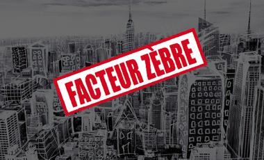Visuel du projet Facteur Zèbre - Promotion du premier album