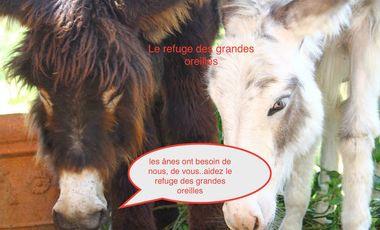 Visuel du projet Aidez Le refuge des grandes Oreilles( sauvetage d'ânes et mulets)