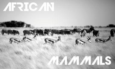 Project visual AFRICAN MAMMALS : Expo Photos de Jérémie TARDY