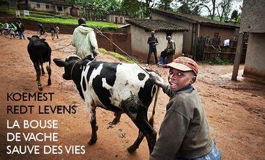 Visuel du projet La bouse de vache sauve des vies / Koemest redt mensenlevens