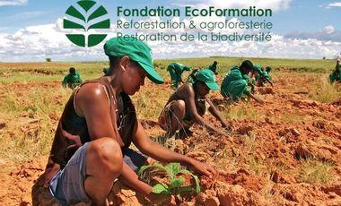 Project visual EcoFormation - Help reforesting primeval forest in Madagascar ! - Aidez-nous à reboiser une ex-forêt primaire à Madagascar !