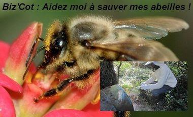 Project visual biz'cot : Aidez moi à protéger mes abeilles !