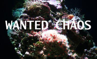 Project visual WANTED CHAOS