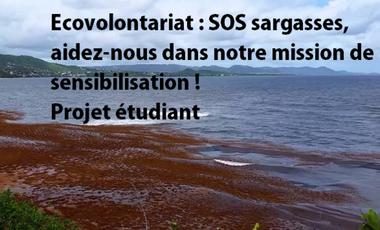 Visuel du projet Ecovolontariat : SOS sargasses, aidez-nous dans notre projet de sensibilisation ! Projet étudiant