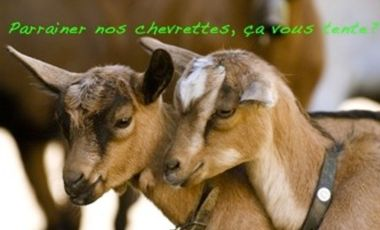 Visuel du projet Une chèvrerie au Carroz d'Arâches, ça vous tente ?