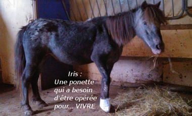 Project visual Iris : Une ponette qui a besoin d'être opérée pour... VIVRE!