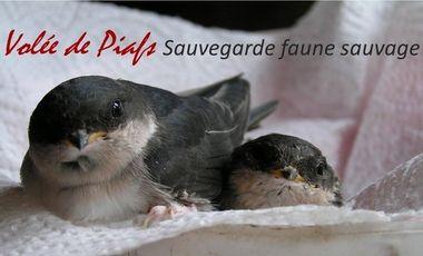 Visueel van project Soins et réhabilitation de la faune sauvage