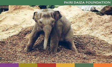 Visueel van project Protégeons les éléphanteaux de l'Herpès / Bescherm jonge olifantjes tegen herpes