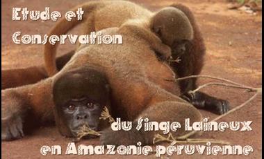 Visuel du projet Étude et conservation du singe laineux en Amazonie péruvienne