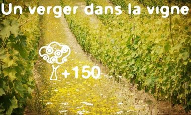 Visueel van project Un Verger dans la Vigne
