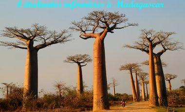 Visueel van project Étudiantes infimières : cap sur Madagascar !