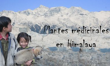 Visueel van project  Plantes médicinales Bio et sanctuaire botanique en Himalaya
