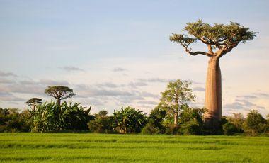 Visuel du projet Topo Sans Frontières Madagascar - mission 1