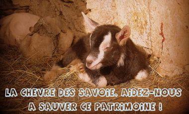 Project visual Une pépinière pour les chèvres des Savoie