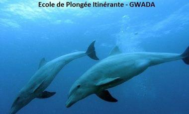 Visueel van project Ecole de Plongée Itinérante - GWADA
