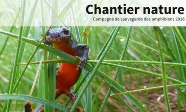 Visuel du projet Chantier nature - Campagne amphibiens 2016