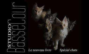 Project visual Studio BasseCour -Les chats- 2ème livre de la collection