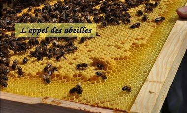 Project visual L'appel des abeilles