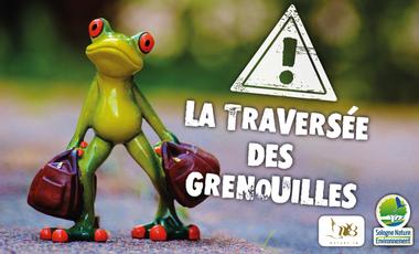 Project visual La traversée des grenouilles