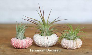 Visuel du projet Terrariums décoratifs faits main ou en kit