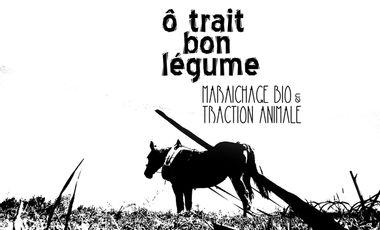 Visueel van project Ô Trait Bon Légume