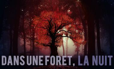 Project visual Dans une forêt, la nuit...