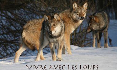 Project visual Vivre avec les loups