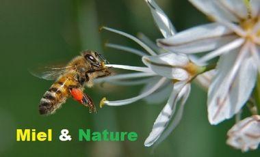Project visual Miel & Nature