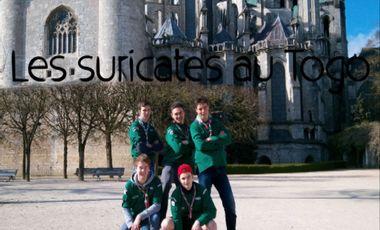 Visuel du projet Les Suricates en expat'