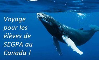 Visueel van project Voyage scolaire : des élèves de SEGPA au pays des baleines!