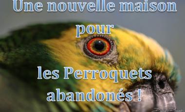 Project visual Une nouvelle maison pour les perroquets abandonnés