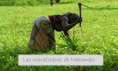 Visuel du projet Les maraîchères de Mahambo
