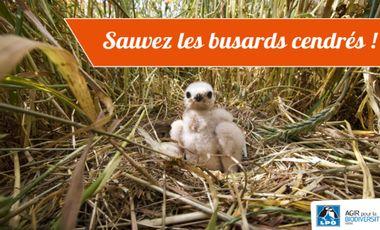 Project visual Sauvez les busards cendrés de la plaine de Bièvre