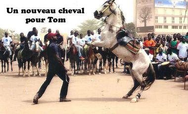 Project visual Un nouveau cheval pour Tom