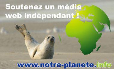 Project visual Aidez-nous à développer un média indépendant !