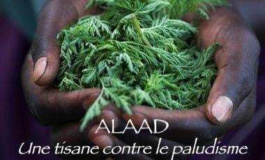 Visuel du projet ALAAD : Une tisane contre le paludisme !