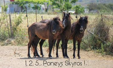 Project visual 1, 2, 5... Poneys Skyros !