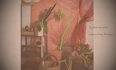 Visuel du projet Faire germer une fleur en coton