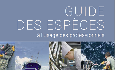 Project visual Guide pour consommer du poisson durable